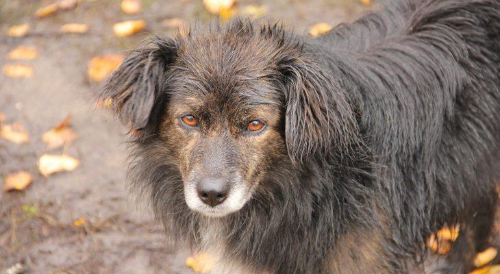 На окраине Саратова собака нашла человеческую голову